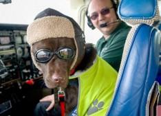 chien-pilote