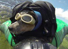 wingsuit_canin